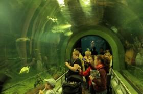 Halas programok országszerte – Tisza-tavi Ökocentrum, Poroszló
