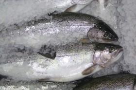 Bio vagy nem bio – melyik a jobb a halaknál?